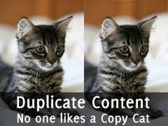 Duplication de chat
