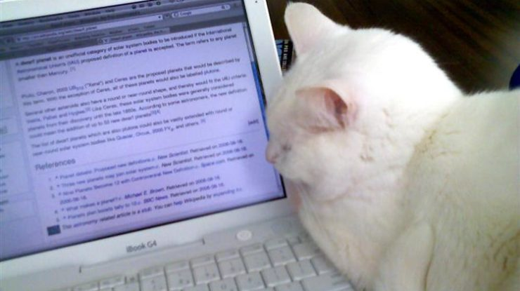 lolcat-wikipedia-editing