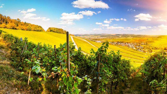 Tourisme dans le vignoble en Alsace